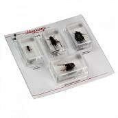 Купить Набор насекомых в акриле Микромед №2